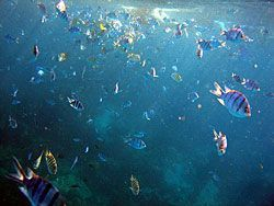 The snorkeling trip to Koh Rang will surprise you with many coloured fish